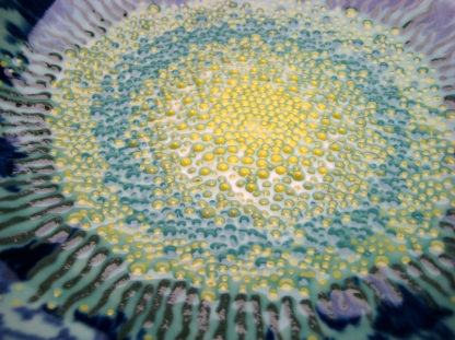 petal bowl 2 - center detail